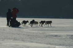 Sled dogs at Read Adventures