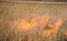 Animais morrem e bombeiros passam mal durante incêndio em Guarajuba