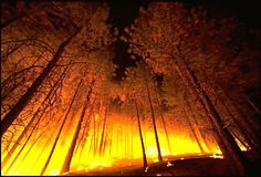 Forest Fires Impact on Social, Cultural and Economic