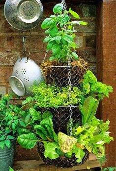 Growing Herbs alternative