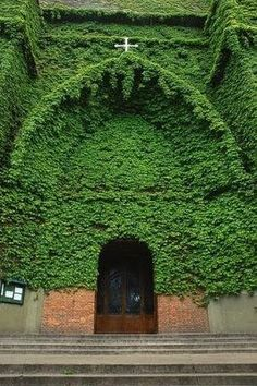 Such a lovely Ivy Covered Church!