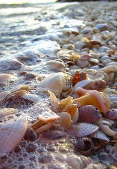 Shell beach in Sanibel Island, Florida, USA