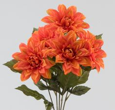 Dahlias are considered quite flamboyant and come in a variety of colors and…
