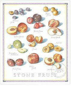 Stone Fruit - John Burgoyne Studio