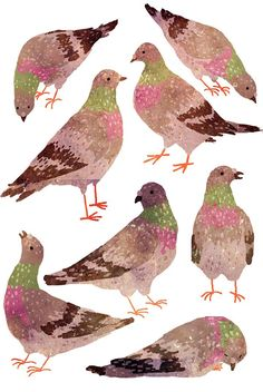 pigeons by Manadhiel.deviantart.com on @DeviantArt
