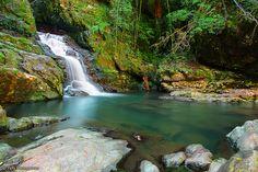Coachwood Falls Dorrigo National Park, NSW, Australia