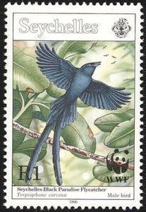 Seychelles Paradise Flycatcher (Terpsiphone corvina)