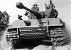 Tiger in Tunisia