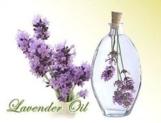 lavender-helps-against-insomnia