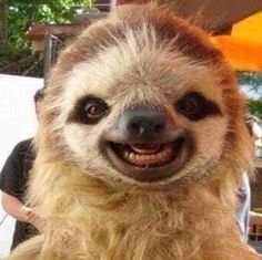 Just 15 Silly Photos Of Smiling Sloths To Cheer You Up - I Can Has Cheezburger? Just 15 Silly Photos Of Smiling Sloths To Cheer You Up - World's largest collection of cat memes and other animals Baby Animals Super Cute, Cute Little Animals, Cute Funny Animals, Smiling Animals, Happy Animals, Smiling Sloth, Farm Animals, Baby Animals Pictures, Cute Animal Pictures
