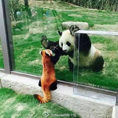 "I feel like the giant panda bear is telling the red panda ""hang in cous' ill get you out!"""