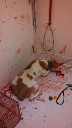 PETITION, PLEASE SIGN AND SHARE! End torture of animals - No Pension for Cheryl Lewis, animal abuser | PetitionHub.org