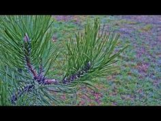 Herbs, Plants, Youtube, Herb, Plant, Youtubers, Youtube Movies, Planets, Medicinal Plants