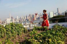 city roof garden