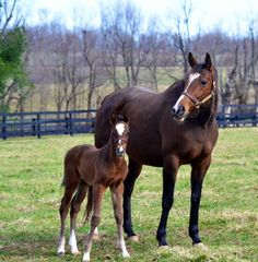 Plum Pretty with her War Front filly, taken on 3/17