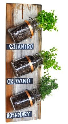 Grow your own herbs! Next DIY project using mason jars and pipe clamps from Canadian Tire @ its-a-green-life