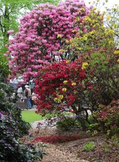 Die Blütenpracht ist vor allem im Mai im Rhododendronpark Westerstede-Linswege unbeschreiblich
