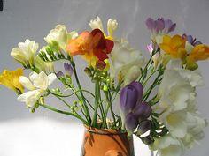 stelian-ilie-flowers 4 Plants, Flora, Plant, Planting