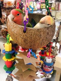 LOVEBIRDS.....most popular types kept as pets are the Fischers Masked and Peach-Faced....measure 4-7 inches long....good for first-time bird owners....great pets for older children....quiet birds....friendly curious very energetic playful love to go inside things