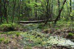 Rezerwat Wielkie Błoto - WartoZwiedzic.pl Mountains, Places, Nature, Garden, Travel, Voyage, Garten, Trips, Viajes