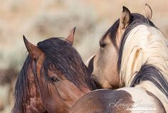 Secrets Wild Horse Fine Art Wild Horse Photo par WildHoofbeats