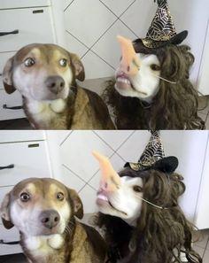 42 images qui vous feront mourir de rire, c'est promis