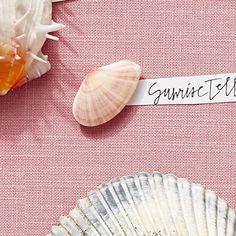 Sunrise Tellin - America's Most Popular Seashells - Coastal Living