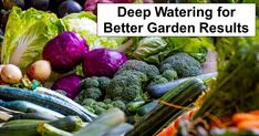 Deep Watering for Better Garden Results – reThinkSurvival.com Types Of Cabbage, The Doctor, Healthy Eating Recipes, Diabetic Recipes, Vegetarian Recipes, Sima Recipe, Fresco, Tips For Going Vegan, Snacks
