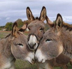 Baby Donkey, Cute Donkey, Mini Donkey, Donkey Donkey, Baby Cows, Baby Elephants, Nature Animals, Farm Animals, Animals And Pets