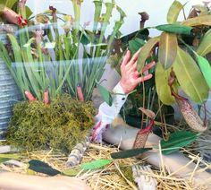 """Флорариум с насекомоядными растениями можно оформить """"со вкусом"""" http://ift.tt/1PRWMt2"""