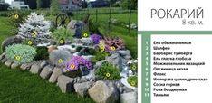 Рокарий площадью 8 м² Plants, Gardening, Lawn And Garden, Plant, Planets, Horticulture