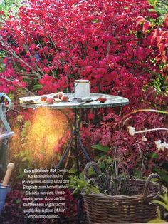 Die 10+ besten Bilder zu Outdoor Garten | gartensessel