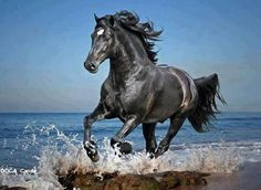 Black Beauty Galloping In Ocean Pretty Animals, Animals Beautiful, Cute Animals, Most Beautiful Horses, Pretty Horses, Black Horses, Wild Horses, Horse Photos, Horse Pictures