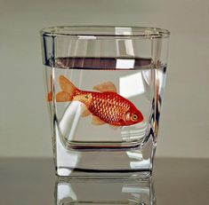 Hyperrealistic Animal Paintings | Young-Sung Kim