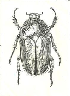 pen beetle - sold