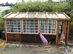 My new greenhouse made of recycled windows and hot tub cedar enclosure and 3 sliding glass doors for roof.