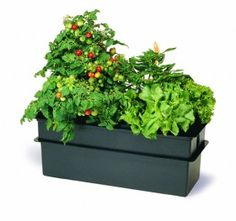 Grow your own salad with the Baby Bloomer Complete Kit! Only $224.95 at www.FullBloomHydroponics.net