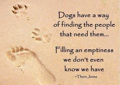"""Dogs have a way of finding the people that need them....filling an emptiness we don't even know we have.""  #pet #truth"