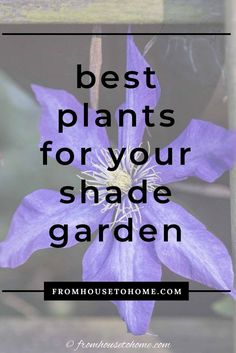 This list of the best shade loving shrubs and perennials is awesome! There are lots of plant options for containers, to grow under trees and that are low maintenance to cover any shade garden landscaping possibilities. #fromhousetohome #gardening #gardenideas #shade #plants #shadeplants Partial Shade Perennials, Shade Flowers Perennial, Shade Loving Shrubs, Shade Shrubs, Flowers Perennials, Low Maintenance Shrubs, Low Maintenance Backyard, Shade Plants Container, Perennial Bushes
