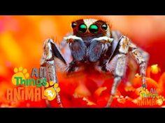 ▶ SPIDERS: Animal videos for children and kids. Preschool | Kindergarten learning. - YouTube