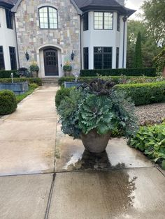 Dirt Simple | Gardening and Landscape Blog by Deborah Silver Outdoor Christmas Planters, Christmas Urns, Evergreen Landscape, Ornamental Cabbage, Fall Containers, Garden Works, Side Garden, Large Plants, Container Plants