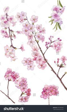 watercolor blossom sakura