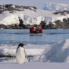 Penguin in Antarctica with One Ocean Expeditions Zodiac