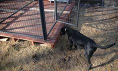 Dog kennel deck