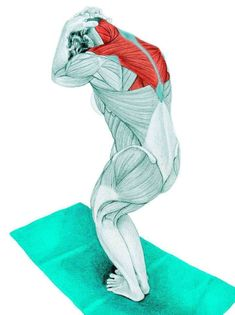 So what kind of muscles do you stretch when you do yoga? Look at these stretching exercises with pictures do find out - Vicky Tomin is a Yoga exercise Muscle Stretches, Stretching Exercises, Scoliosis Exercises, Kundalini Yoga, Yoga Meditation, Yoga Sequences, Yoga Poses, Muscle Anatomy, Reflexology