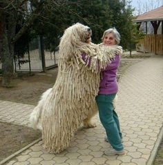 huge-dogs-feel-small-33