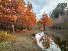 # Pond Autumn Park Wallpaper Pictures, Cool Wallpaper, Wallpaper Backgrounds, Wallpapers, Hd Flowers, Autumn Park, Fall Photos, Pond, Country Roads