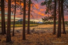 Sunset from Indian Ford Meadow outside Sisters, Oregon. ----------------------------- @extreme_oregon