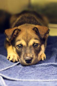Dog Training: Cratetraining 101