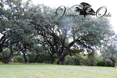 Beautiful outdoor wedding venue serving the south Texas area. Perfect for both ceremony and reception use. Gorgeous tall Oak trees surrounding the property. www.vintageoaksevents.com